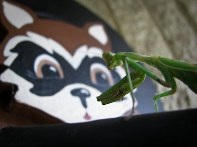 Praying Mantis and Rocky