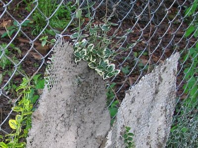 er metal mesh is attached to the chain link fence to provide support for the concrete.