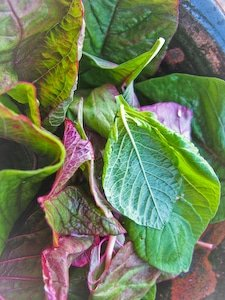 Amaranth Leaves