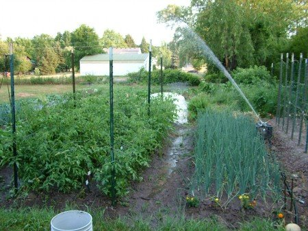 Overhead Irrigation System for a Backyard Garden The CobraHead Blog