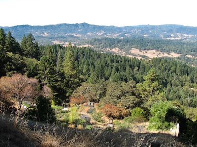 The Garden of Ecology Action, nestled in redwood hills