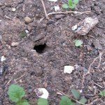 Small hole in soil.