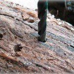 Drilling holes in oak log to make nesting site for native bees
