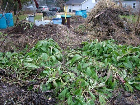 Comfrey and Compost Piles