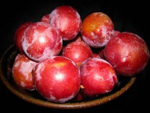 bowl of harvested plumcots