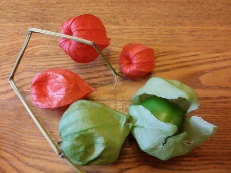 Chinese Lanterns and Tomatillos