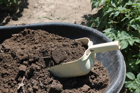 Grain Scoop in Wheelbarrow