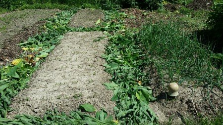 Mulching the Paths with Comfrey
