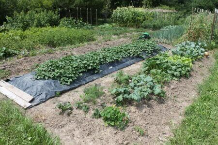 Open Raised Bed Garden The Cobrahead Blog