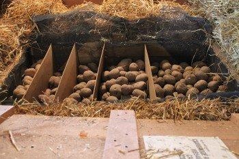 200 Pounds of Potatoes